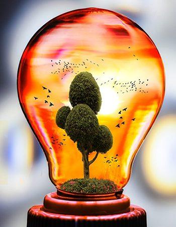 bombilla árbol cuidemos medio ambiente