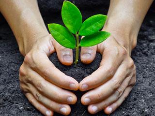 plantar árbol cuidemos medio ambiente