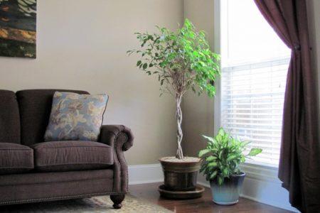 plantas-para-decorar-interiores-elegantes
